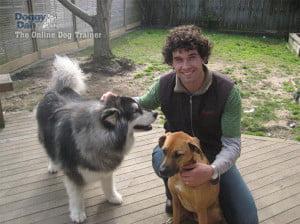 Online dog training with Dan Abdelnoor