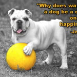 Dog quotes jonathan safran foer Why does watching a dog be a dog fill one with happiness?