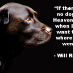 "Dog quotes Will Rogers - ""If there are no dogs in Heaven, then when I die I want to go where they went."""