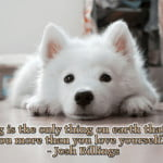 "Josh billings quote ""A dog is the only thing on earth that loves you more than you love yourself."" white dog laying down pic"
