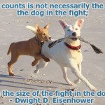 Dwight d eisenhower quotes dog quotes dogs playing on beach